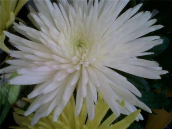 centros de flores villalba