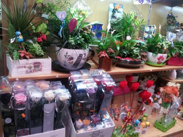 plantas de interior villalba